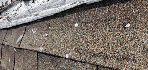 This is a close up of exposed nails on the shingles.