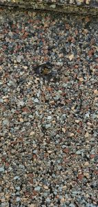 This is an up close view of a hole in the shingle.