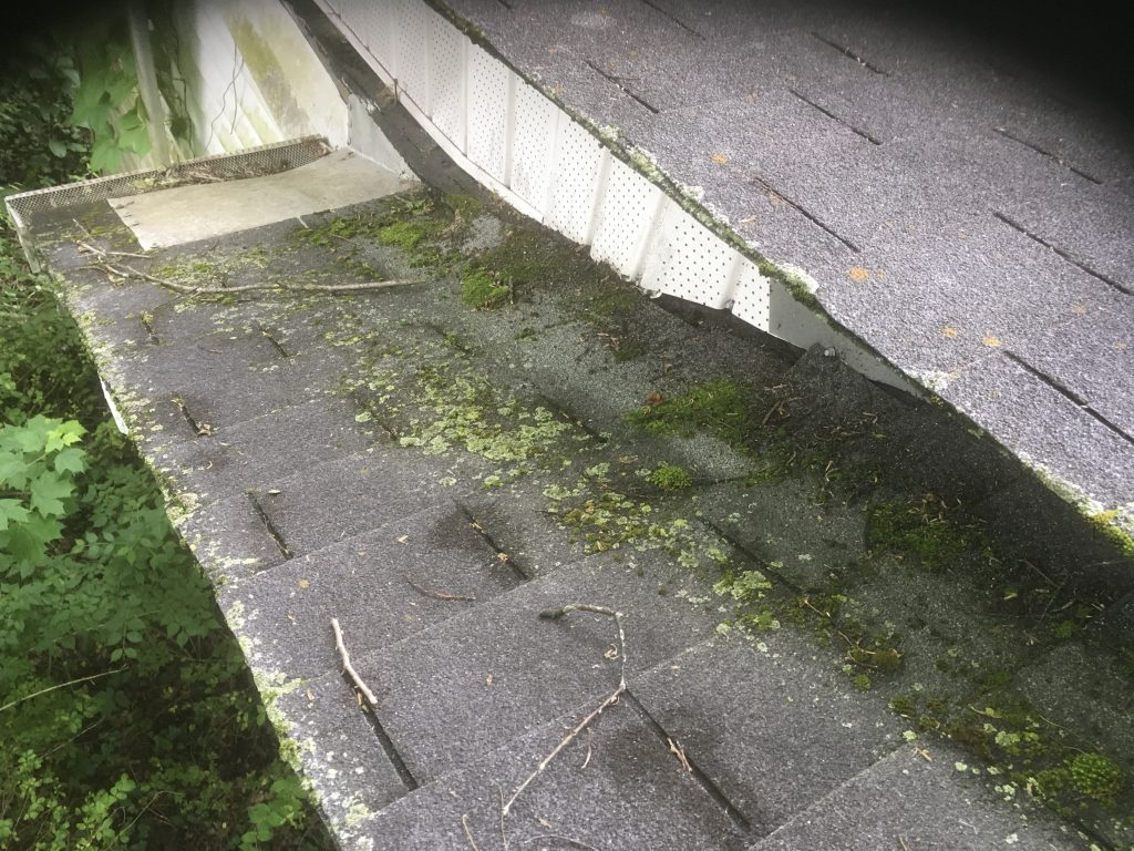 The shingles in this photo are covered in moss.
