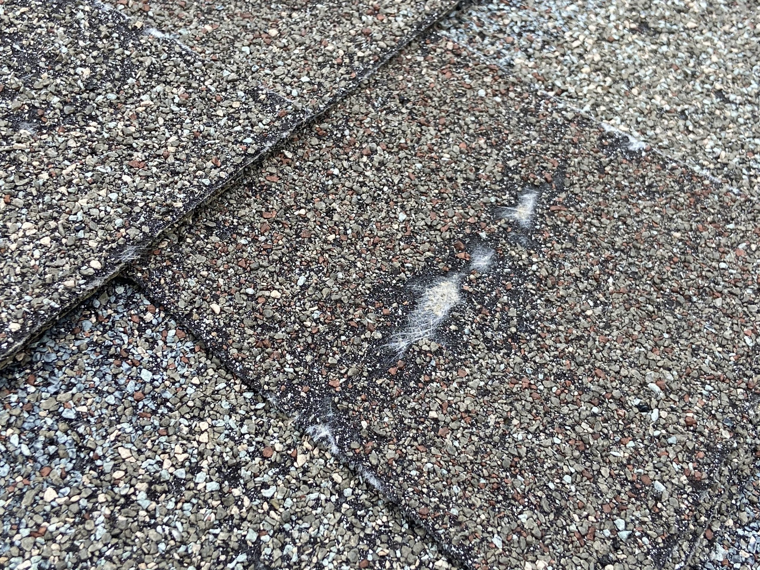 This is a view of a shingle with exposed fiberglass mat.
