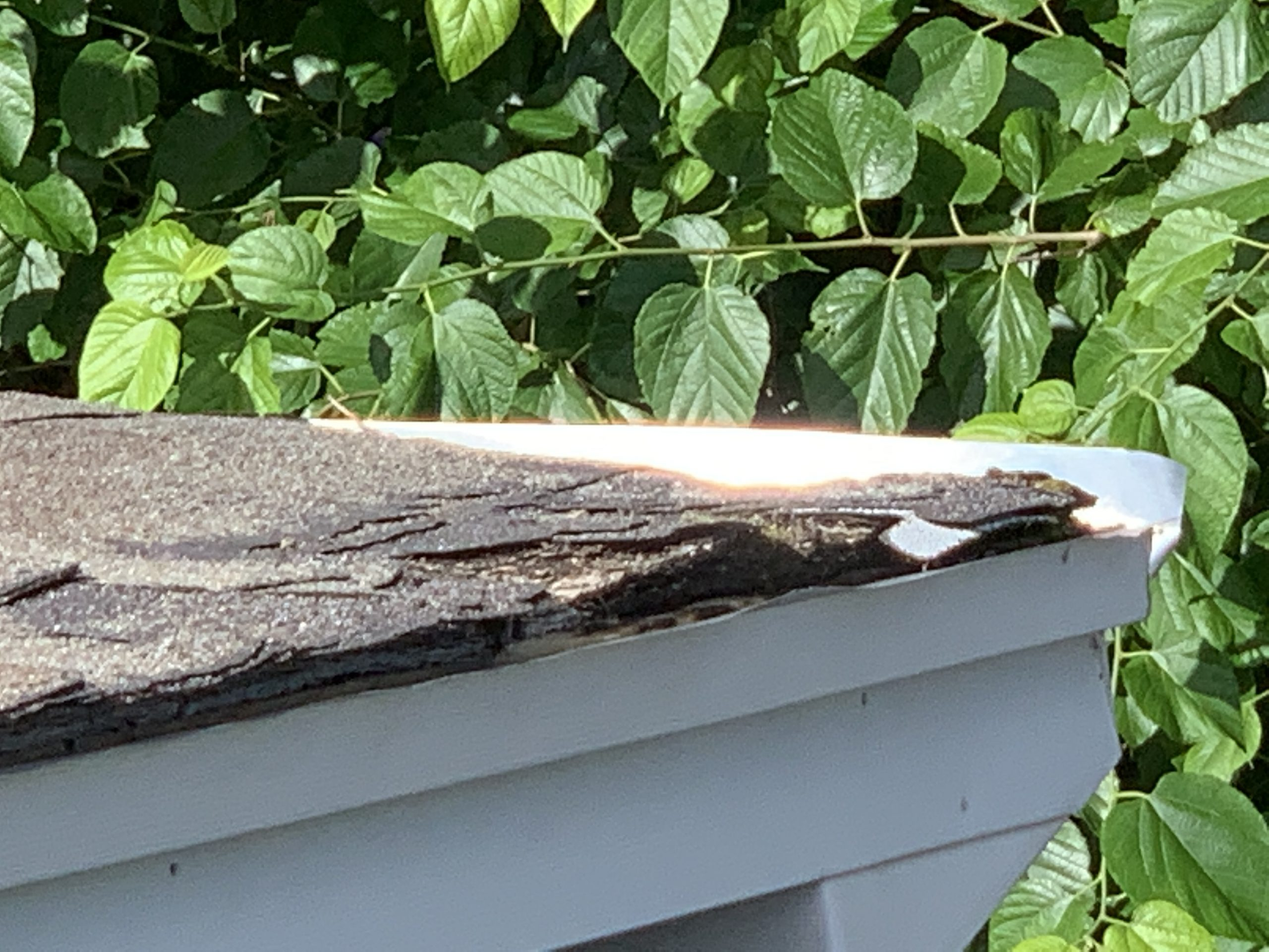 this is a picture of the roof line of a roof showing that there are cracks in this shingle