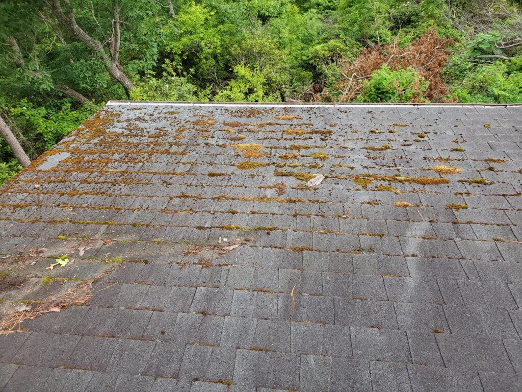 Moss growing on old shingle roof