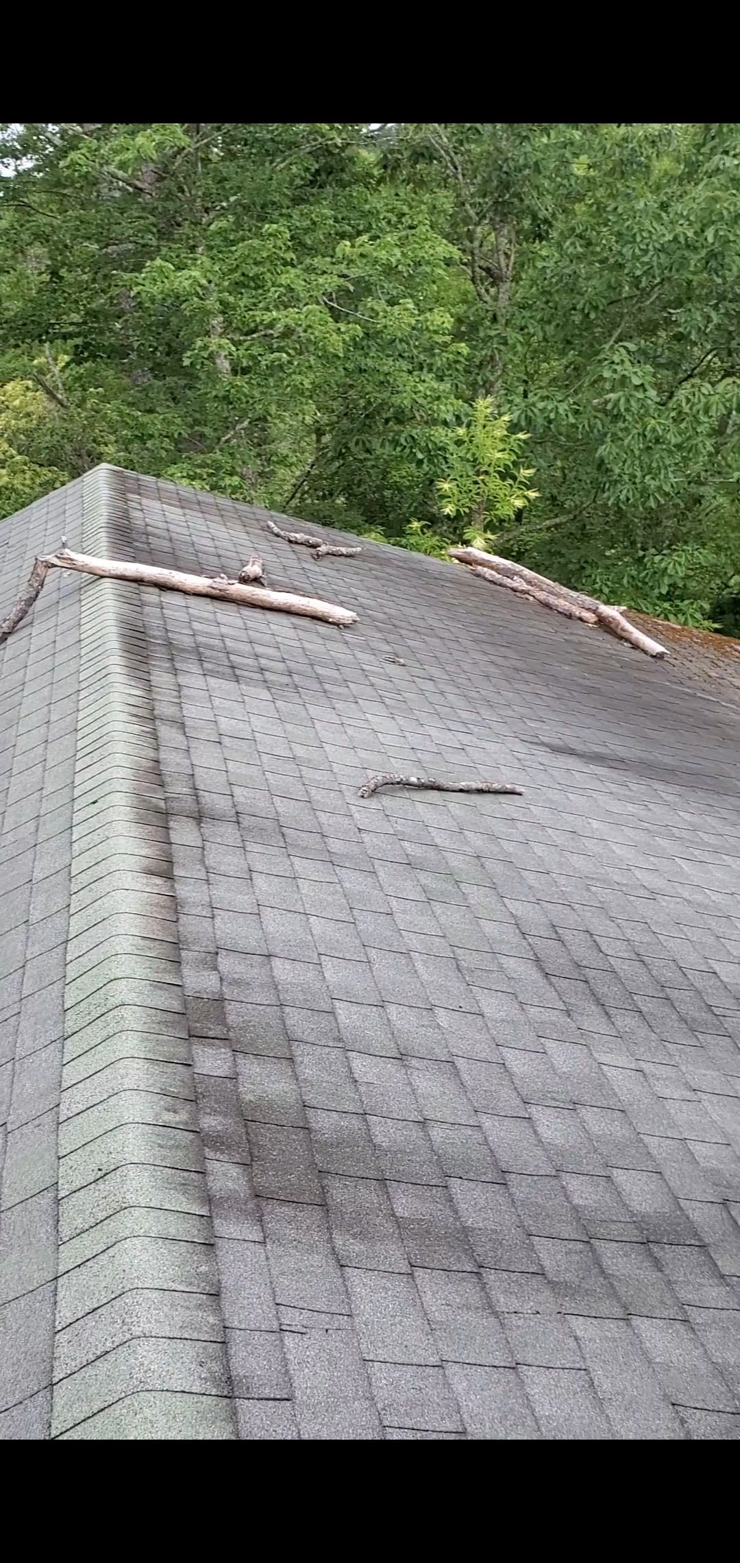 This is a picture of tree limbs on the roof of the house.