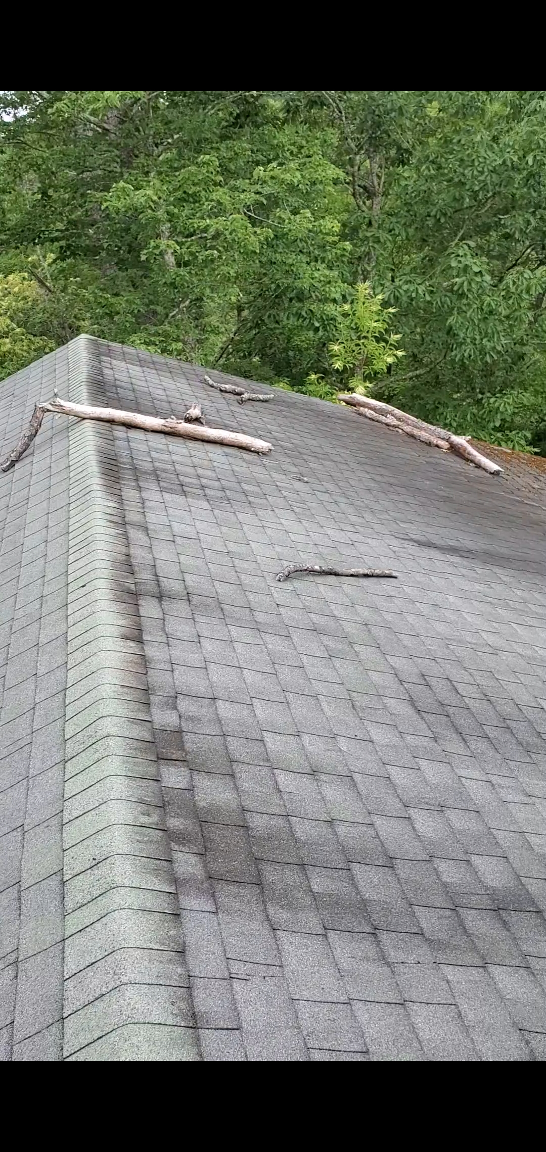 This is a picture of tree limbs that have fallen on the roof.