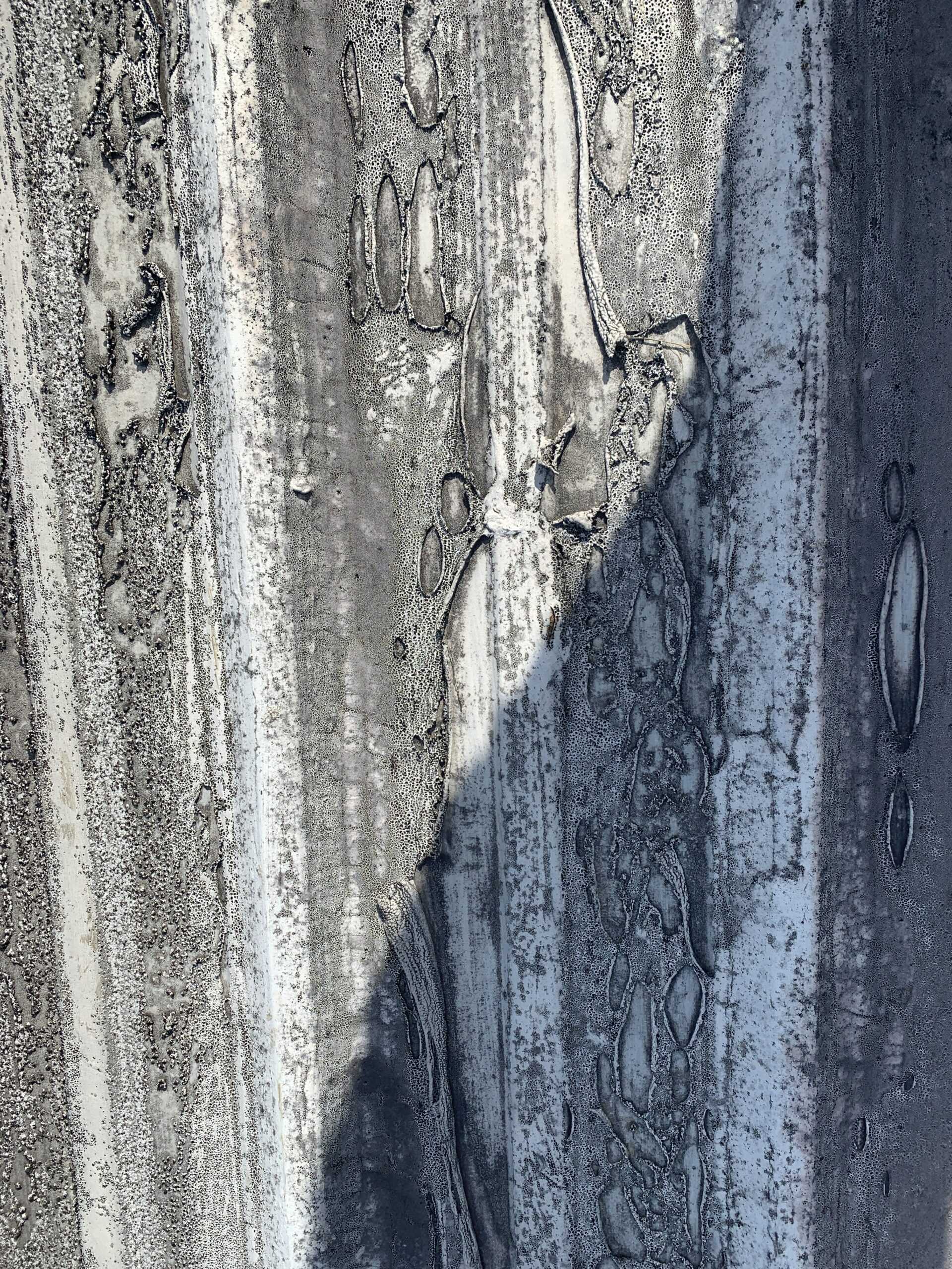 this is a picture of an old roof coating with all sorts of problems