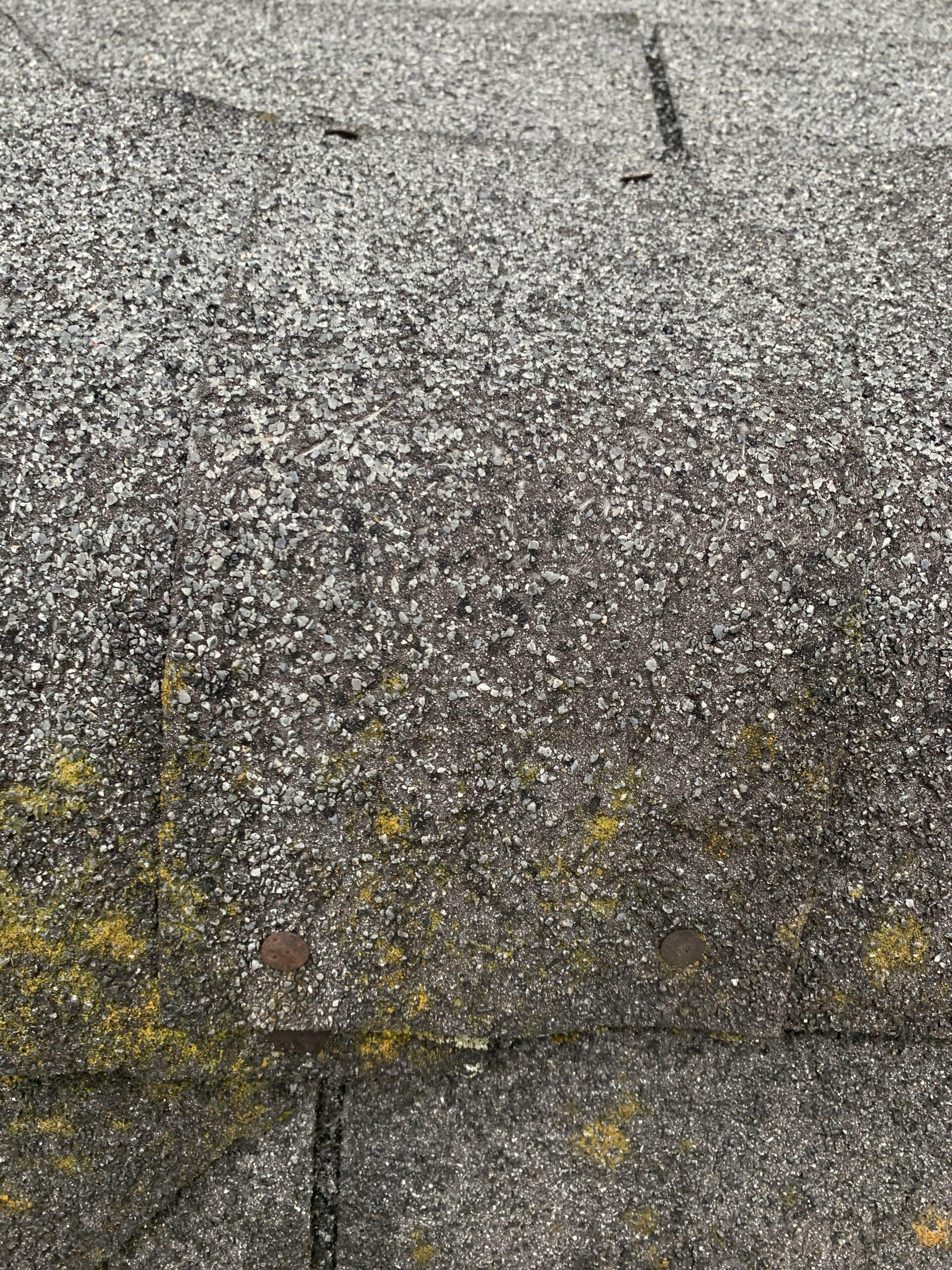 Old three tab shingle roof. Then shingles granule loss and moss and algae