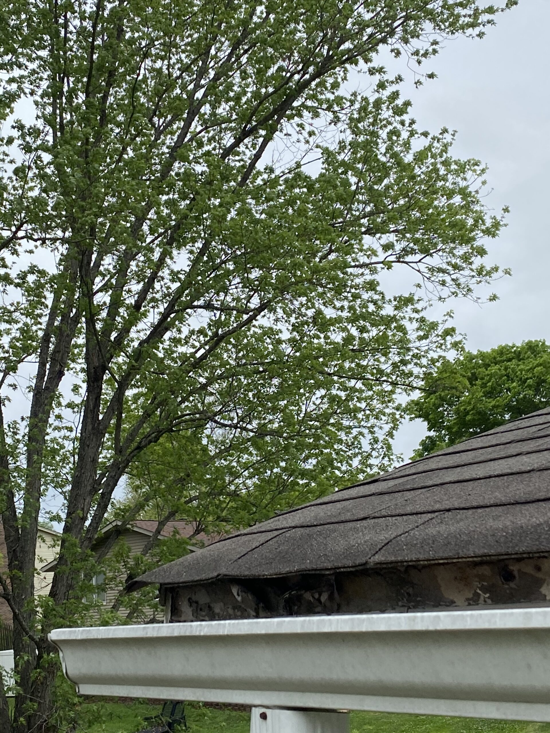 This is a picture of an old white gutter with rotting fascia boards behind it